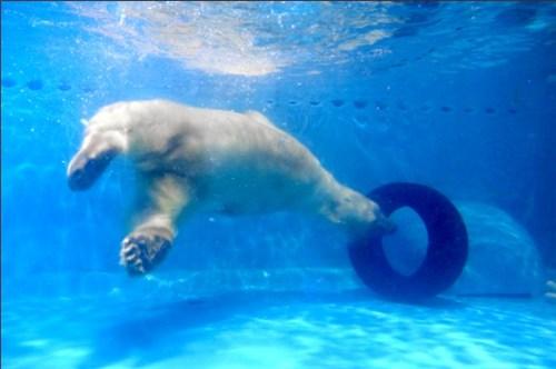 """最""""悲惨""""北极熊在广州商场? 正佳回应虐待动物传言"""