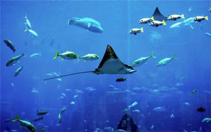 壁纸 动物 海底 海底世界 海洋馆 水族馆 鱼 鱼类 桌面 418_261